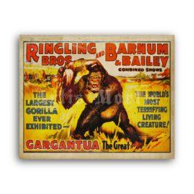 Printable Gargantua Giant Gorilla - Ringling, Barnum and Bailey poster - vintage print poster