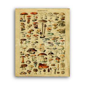 Printable Poisonous mushrooms tab - mycology botanical art print - vintage print poster