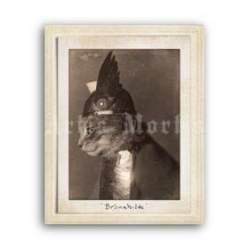 Printable Cat Viking in warrior helmet - Brunnhilde - vintage photo - vintage print poster