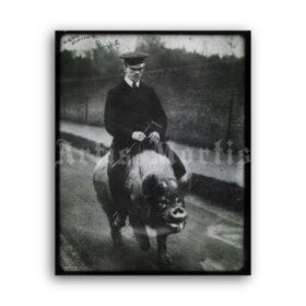 Printable Pig riding, man on the pig - vintage photo, retro humour print - vintage print poster