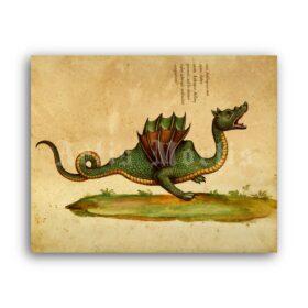 Printable Dragon, monster - medieval bestiary art, fantasy animal, cryptid - vintage print poster