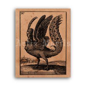 Printable Harpy, bird of Hell - medieval art, fantasy, dragon, mythology - vintage print poster